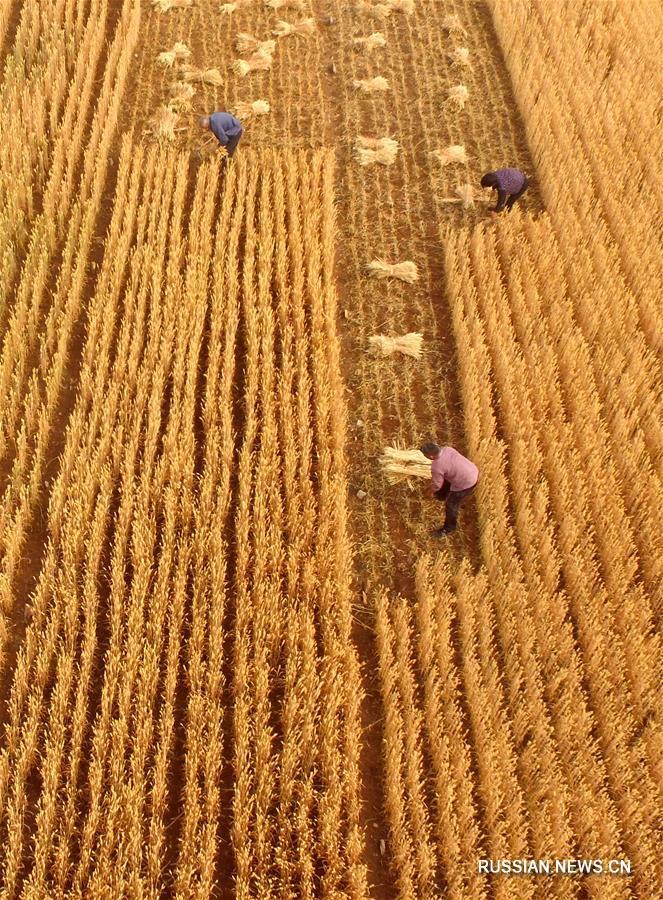 Летние заботы китайских фермеров