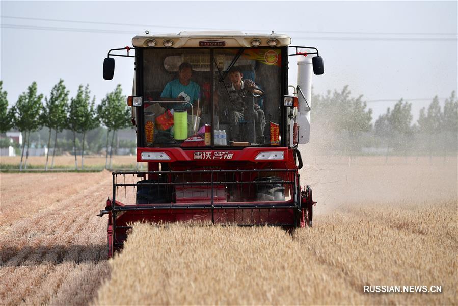 В провинции Хэнань началась уборка урожая пшеницы