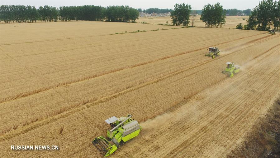 В провинции Аньхой собирают урожай пшеницы