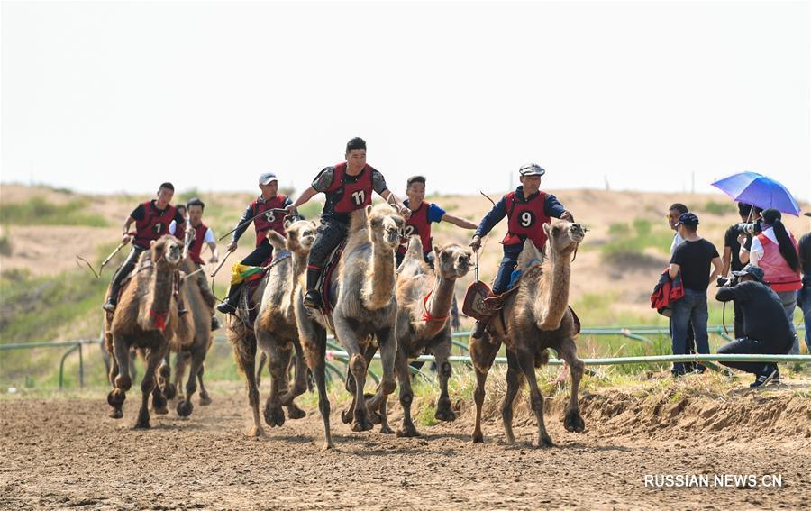 """Фестиваль """"Надам"""" в монгольской пустыне"""