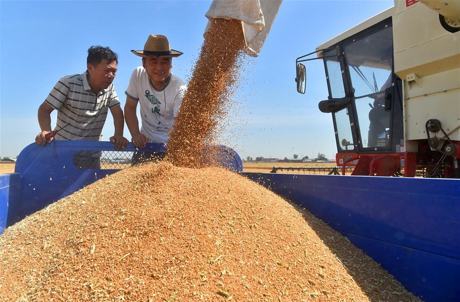 Уборка урожая пшеницы в Китае
