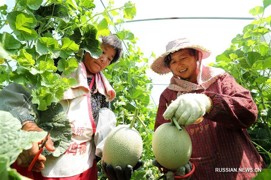 Сбор фруктов на востоке Китая