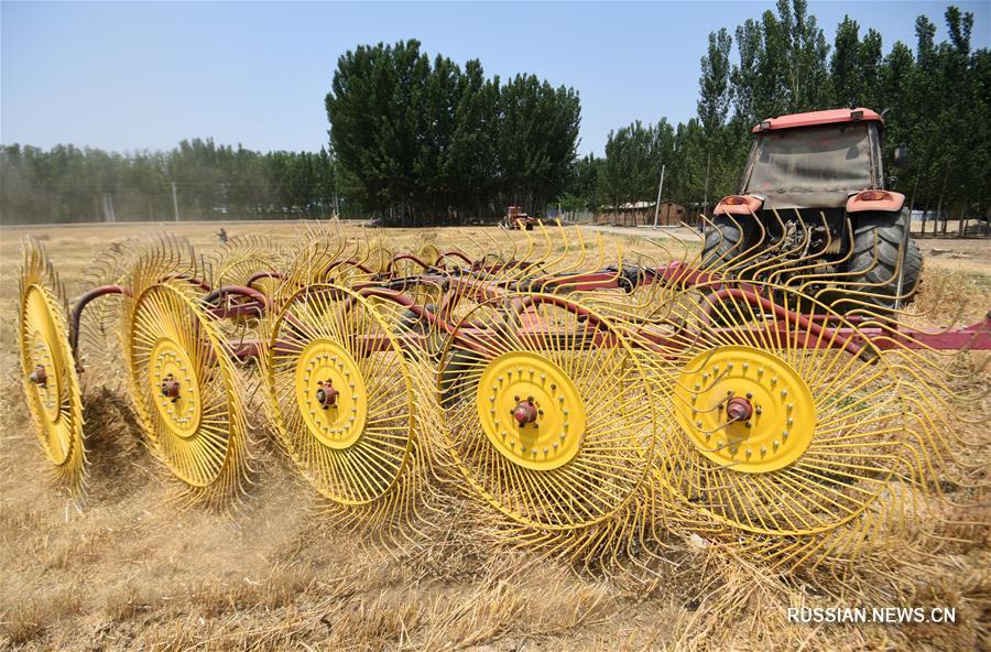 Отходы в доходы: новое применение пшеничной соломы