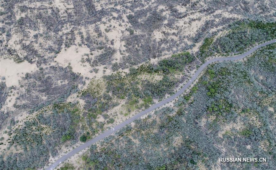 """Великая зеленая стена"" на краю пустыни Му-Ус"