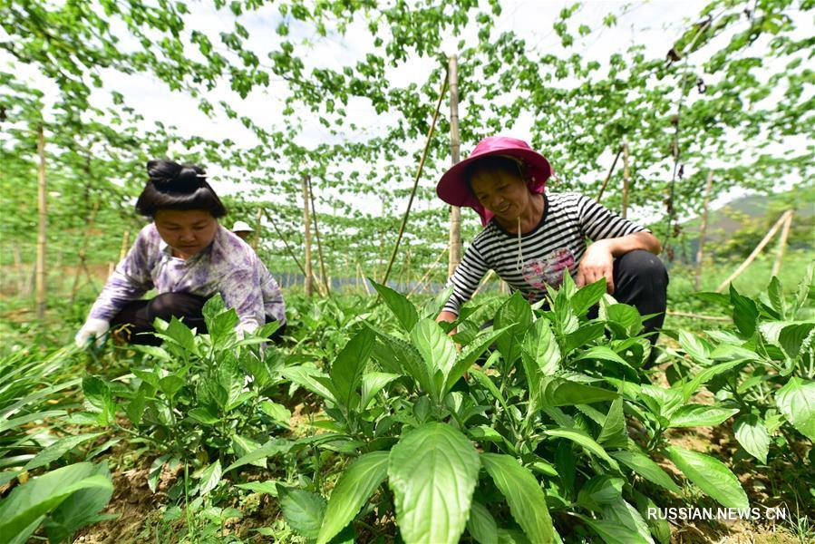 Наглядные результаты структурной реформы аграрного производства в провинции Гуйчжоу
