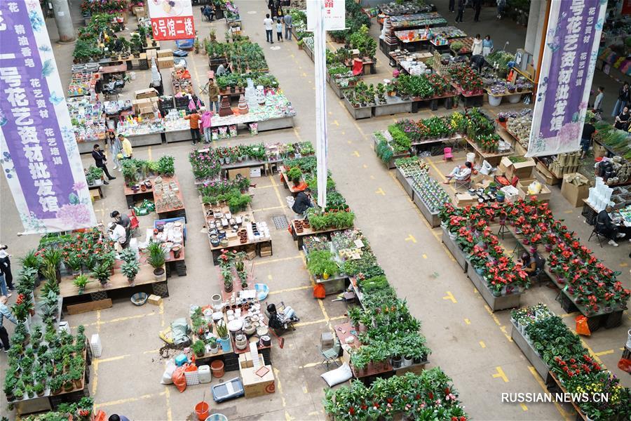 В преддверии открытия Куньминской международной цветочной выставки