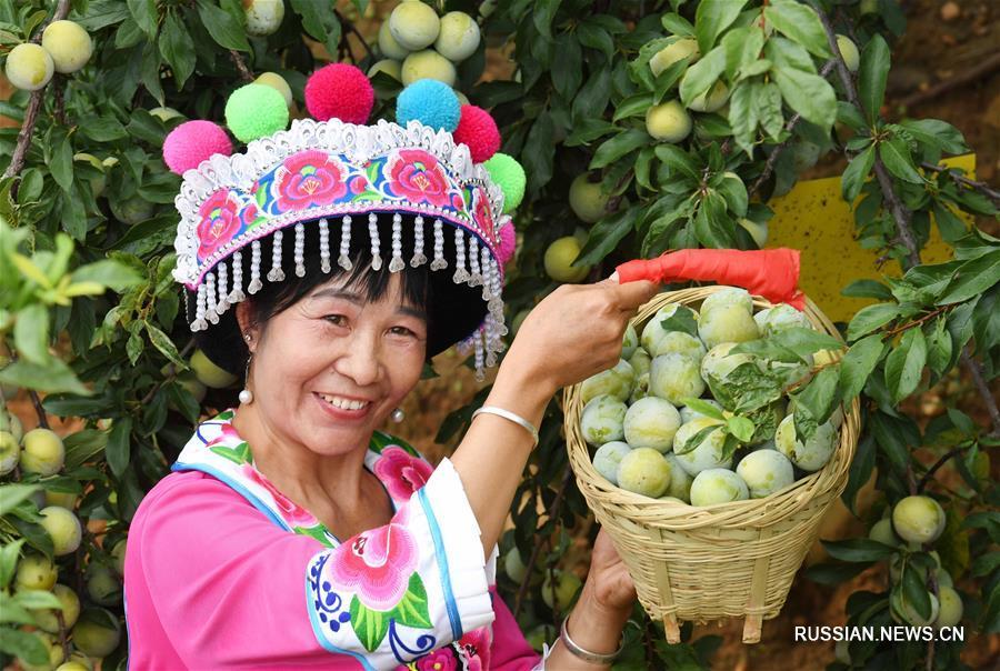 2-й Синьхуаский фестиваль сельского туризма и персиков в уезде Юаньмоу