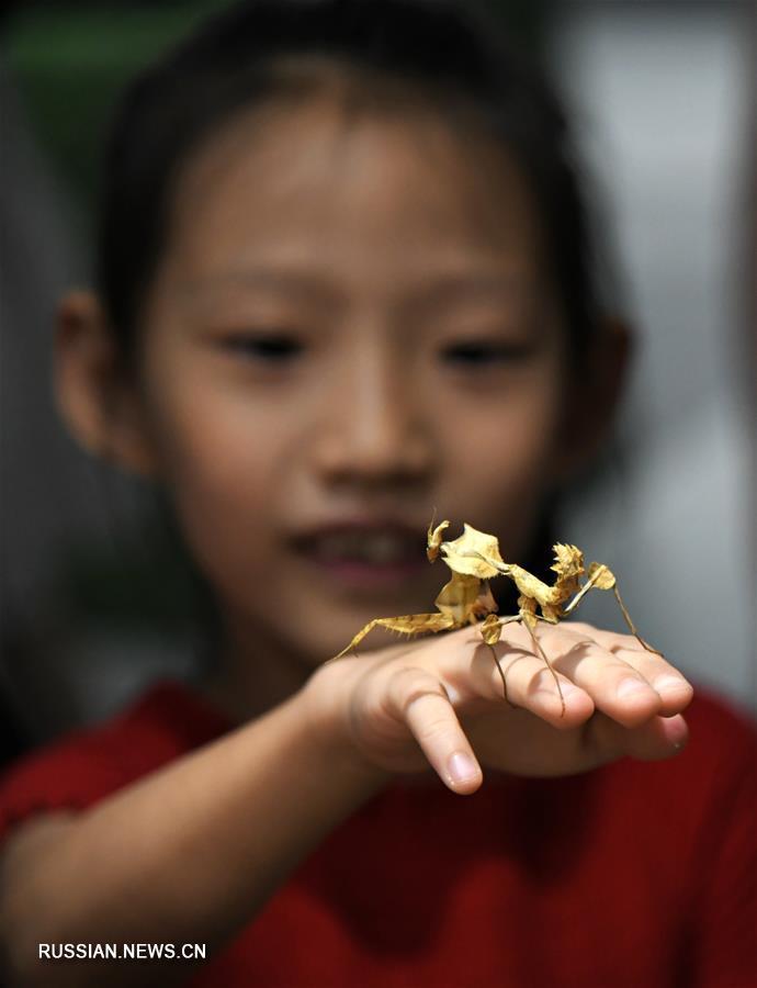 Летнее путешествие в мир насекомых на выставке в Сиане