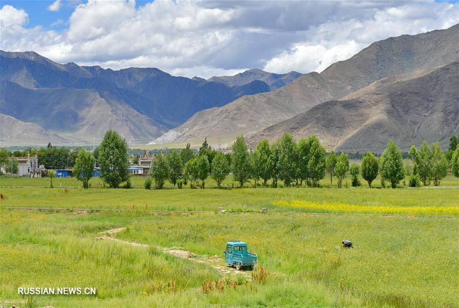 Летний пейзаж близ автомагистрали Лхаса-Линьчжи в Тибете