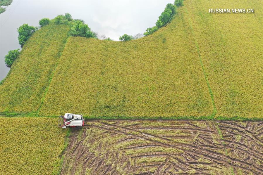 Поля в Хэнъяне оправляются после паводка