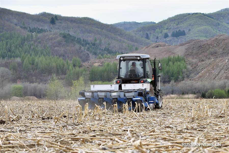 Посевные площади зерновых в провинции Цзилинь должны достичь 85 млн му