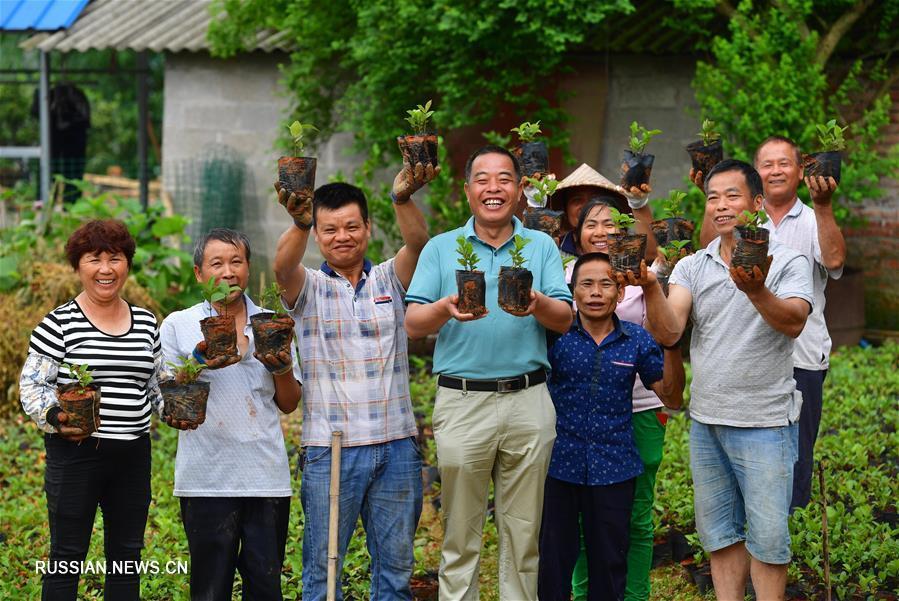 Развитие современного сельскохозяйственного производства в уезде Лучжай