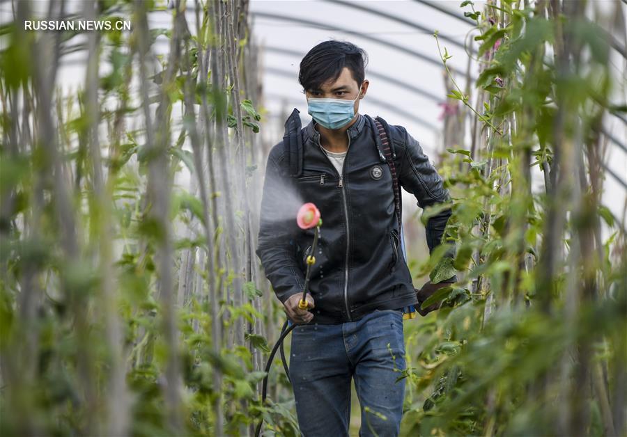 Крестьяне в Синьцзяне заняты сельскохозяйственными делами в летнюю пору