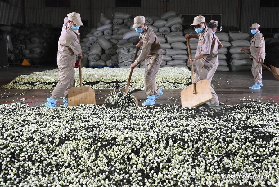 В январе-апреле 2020 года экспорт чая из провинции Фуцзянь вырос на 8,7 проц