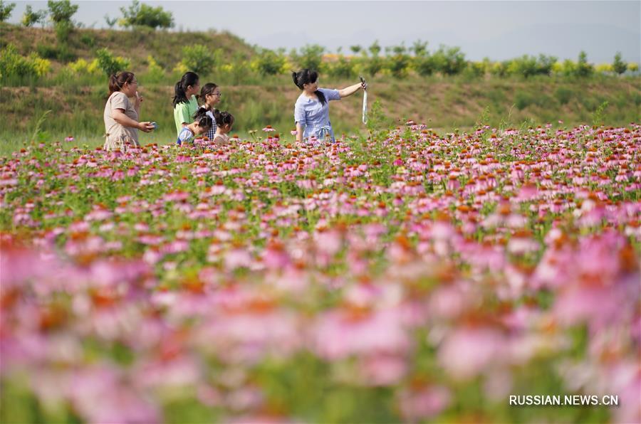 Нэйчу стал новым поставщиком сырья для традиционной китайской медицины