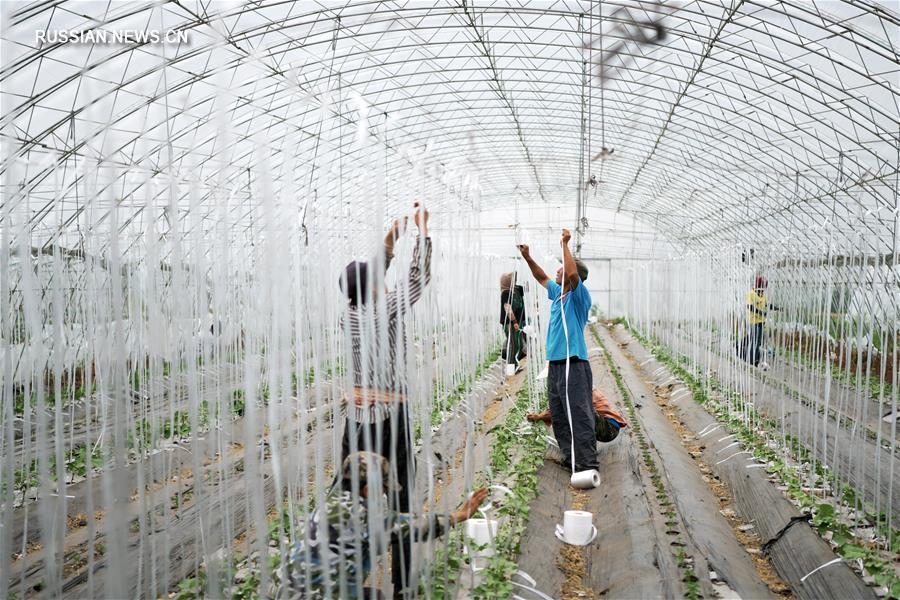 Сельский экотуризм помогает крестьянам на северо-востоке Китая в увеличении доходов