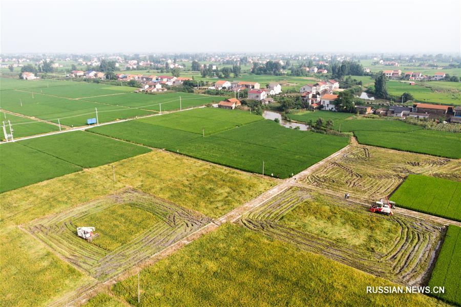 Летняя страда на полях провинции Хунань