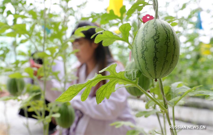 Летняя жизнь магистрантов из Шэньянского сельскохозяйственного университета
