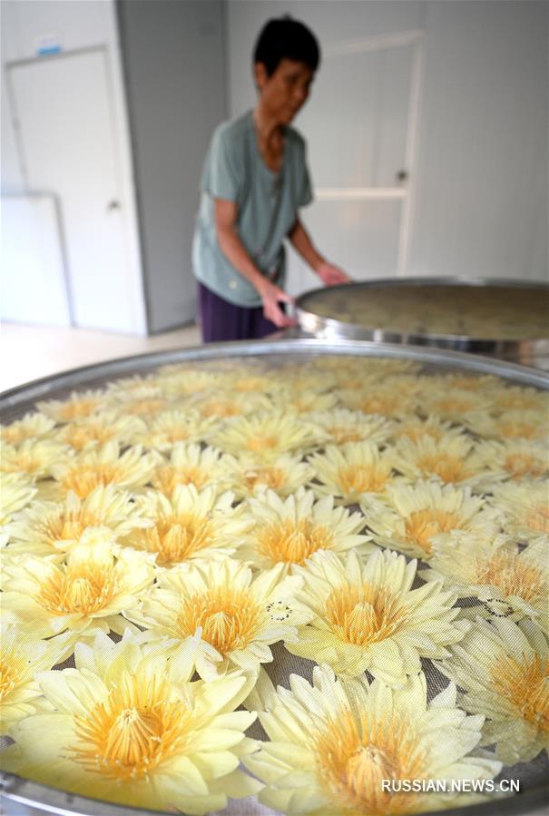 Сбор цветов лотоса в деревне Сятао