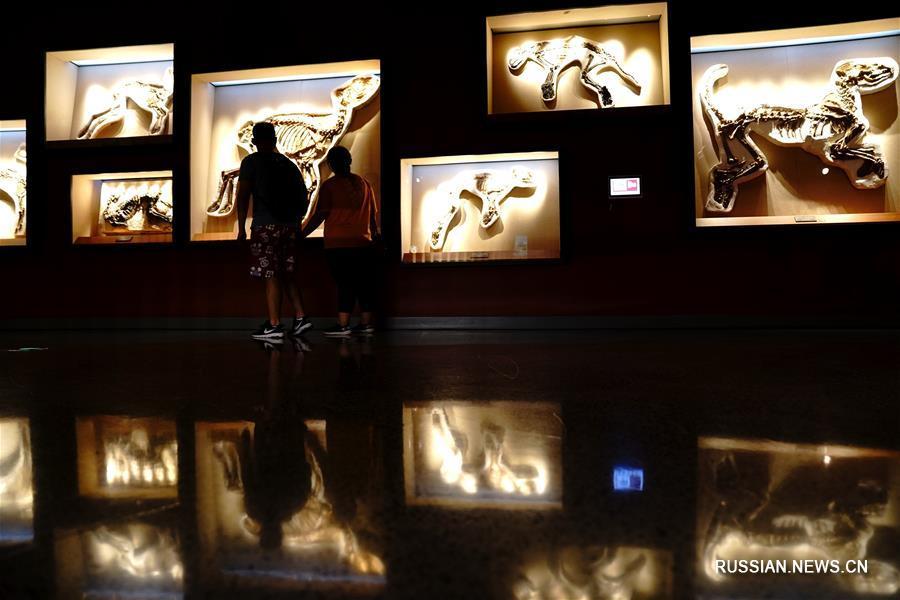 Летняя экскурсия в Шанхайский музей естественной истории