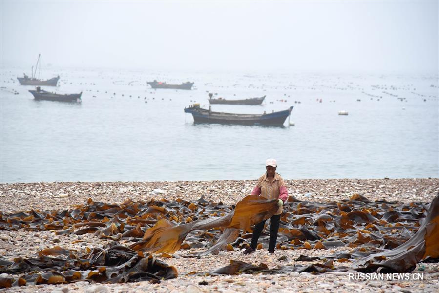 Производство морской аквакультуры на острове Наньхуанчэн