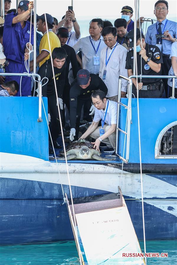 В Южно-Китайское море выпущены 99 спасенных морских черепах