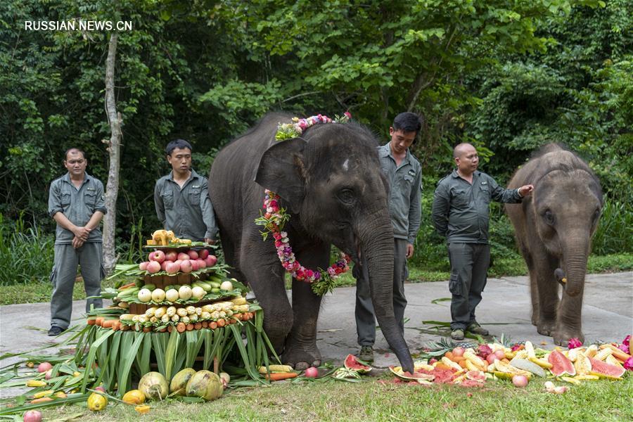 Слонихе Янню -- 5 лет!
