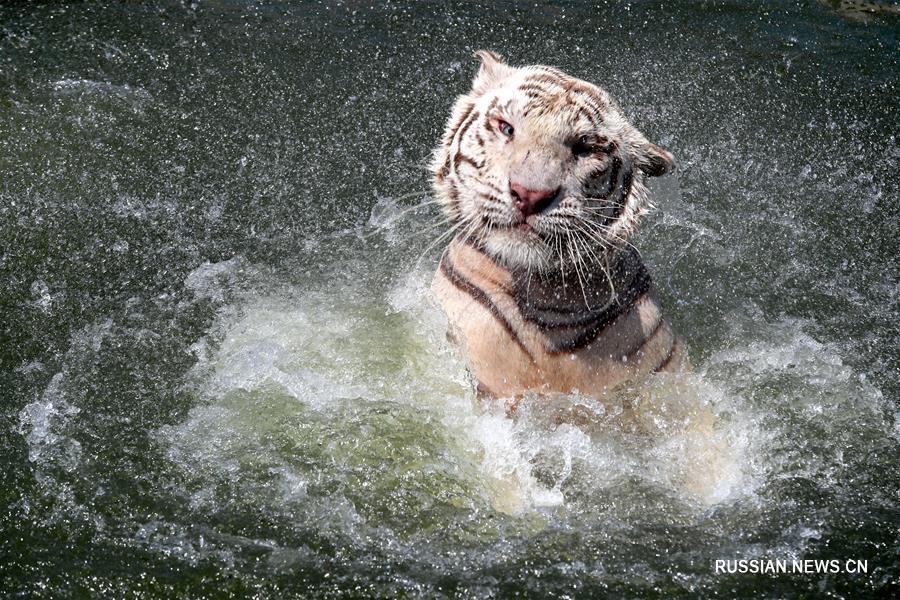 Обитатели зоопарка в Наньтуне со вкусом спасаются от жары