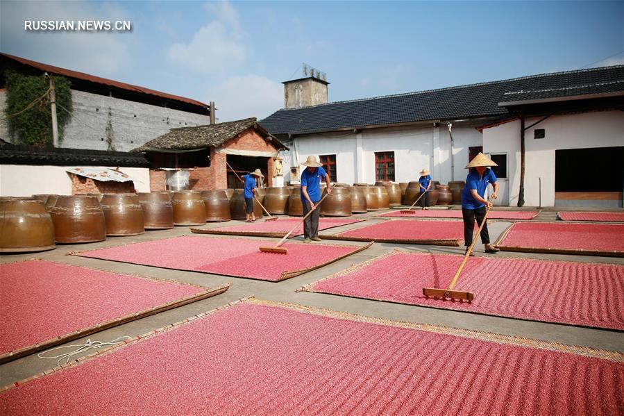 Сушка красного дрожжевого риса в Дунъяне