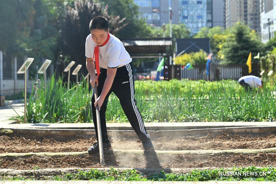 Работа на школьном огороде в одной из школ Сианя