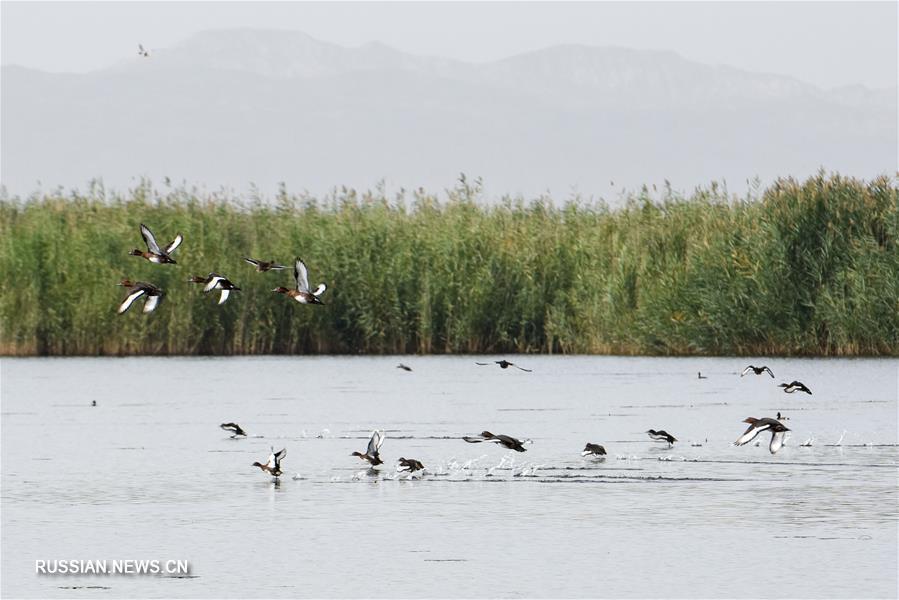 Гармония человека и речной природы в уезде Баграш