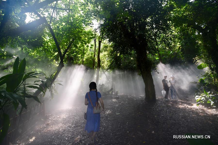 Тропические пейзажи Сямэньского ботанического сада