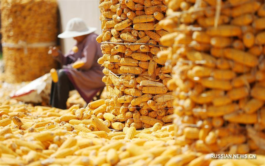 Урожайная осень на востоке Китая