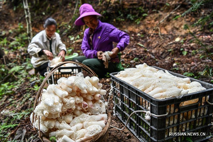 """""""Лесная экономика"""" горного уезда в провинции Гуйчжоу"""
