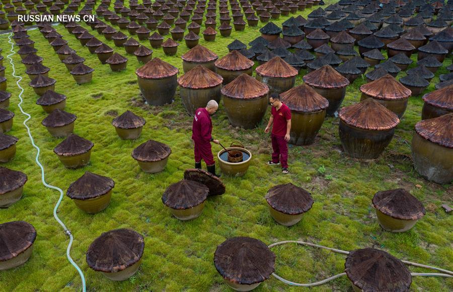 Традиционное производство соевого соуса в провинции Сычуань