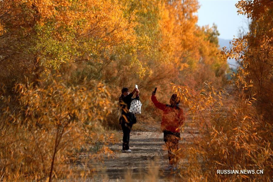 Золотая роща евфратских тополей посреди пустыни