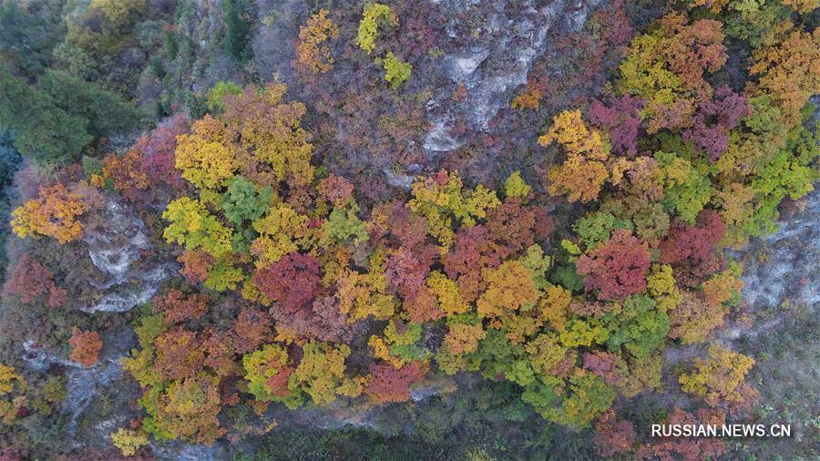 Золотая осень в заповеднике Синлуншань