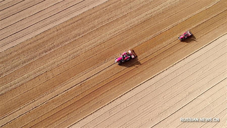 Сев озимой пшеницы в провинции Хэбэй