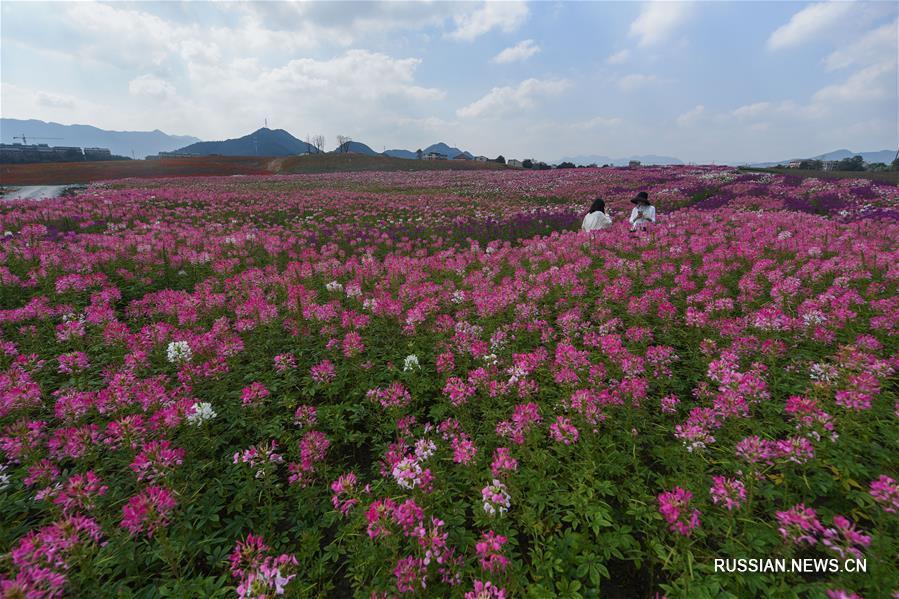 Чудесное преображение озера Янбэйху в Ханчжоу