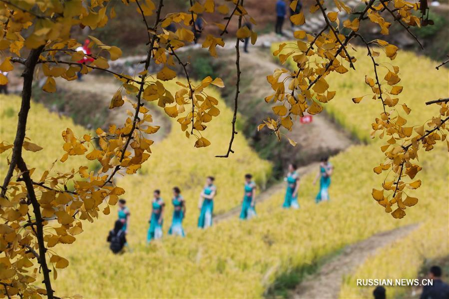 Чжинаньский фестиваль красных листьев в провинции Чжэцзян
