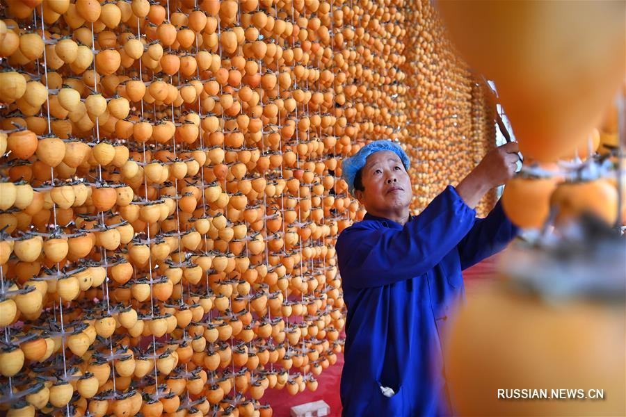 На фабрике по производству сушеной хурмы в уезде Фупин