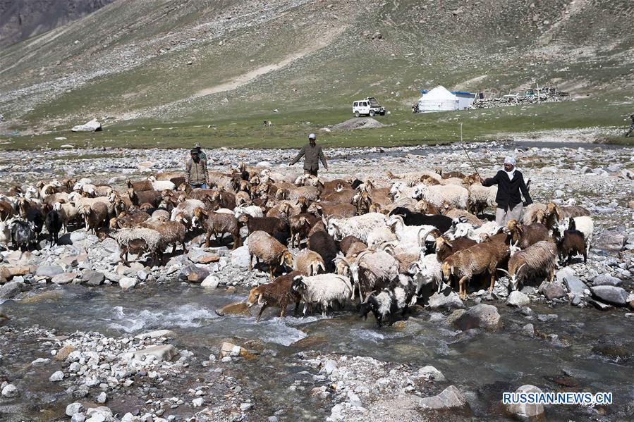 Летние заботы скотоводов-кочевников в Ваханском коридоре