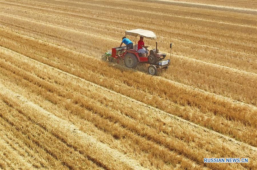 Уборка и сев в один день на полях провинции Хэбэй