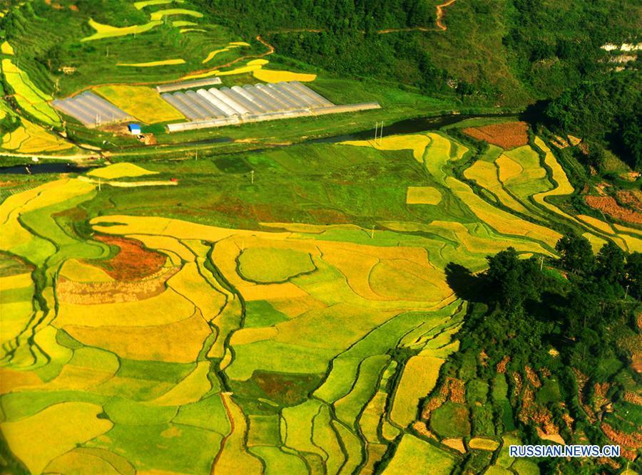 Террасные поля уезда Хуанпин с высоты птичьего полета