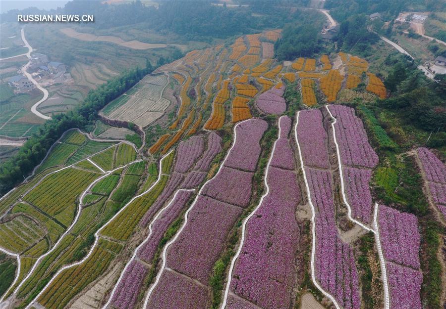 Пестрые цветочные моря на террасных полях Чжанцзяцзе