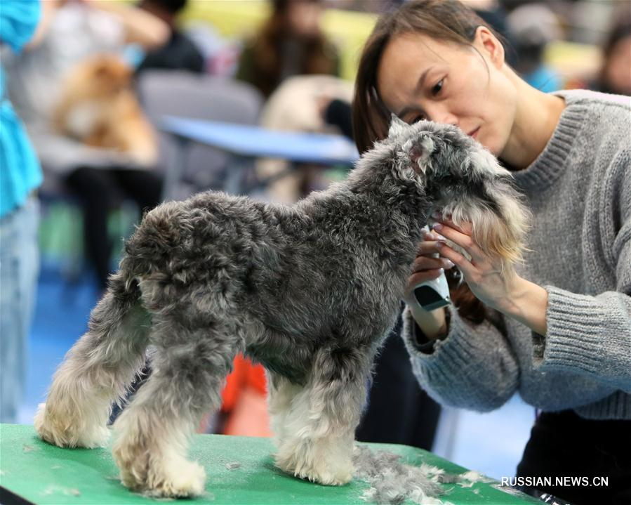 Конкурс красоты среди собак в Сянгане