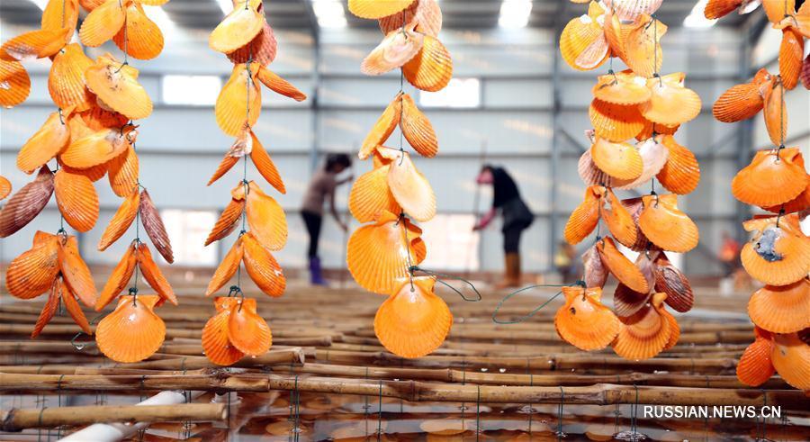 Водорослевая ферма в Цюаньчжоу