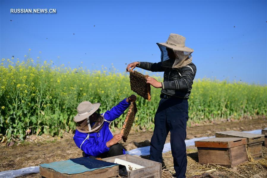 Весенние хлопоты китайских пчеловодов