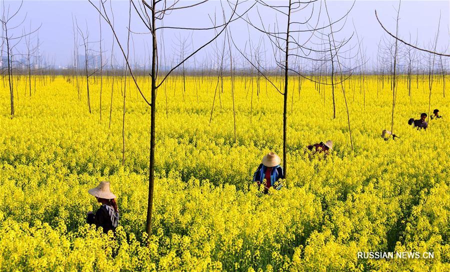 Защита берегов Янцзы в провинции Хубэй