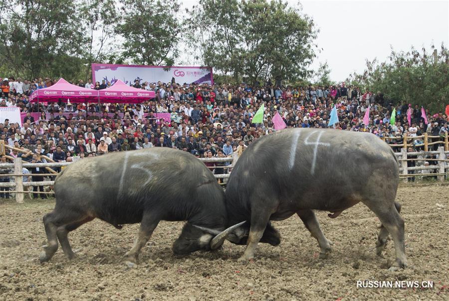 Культурный фестиваль Булото в Байсэ